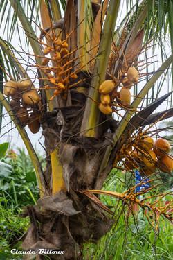 Martinique_0525.jpg