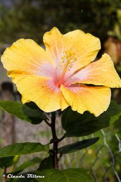 Martinique_0611.jpg