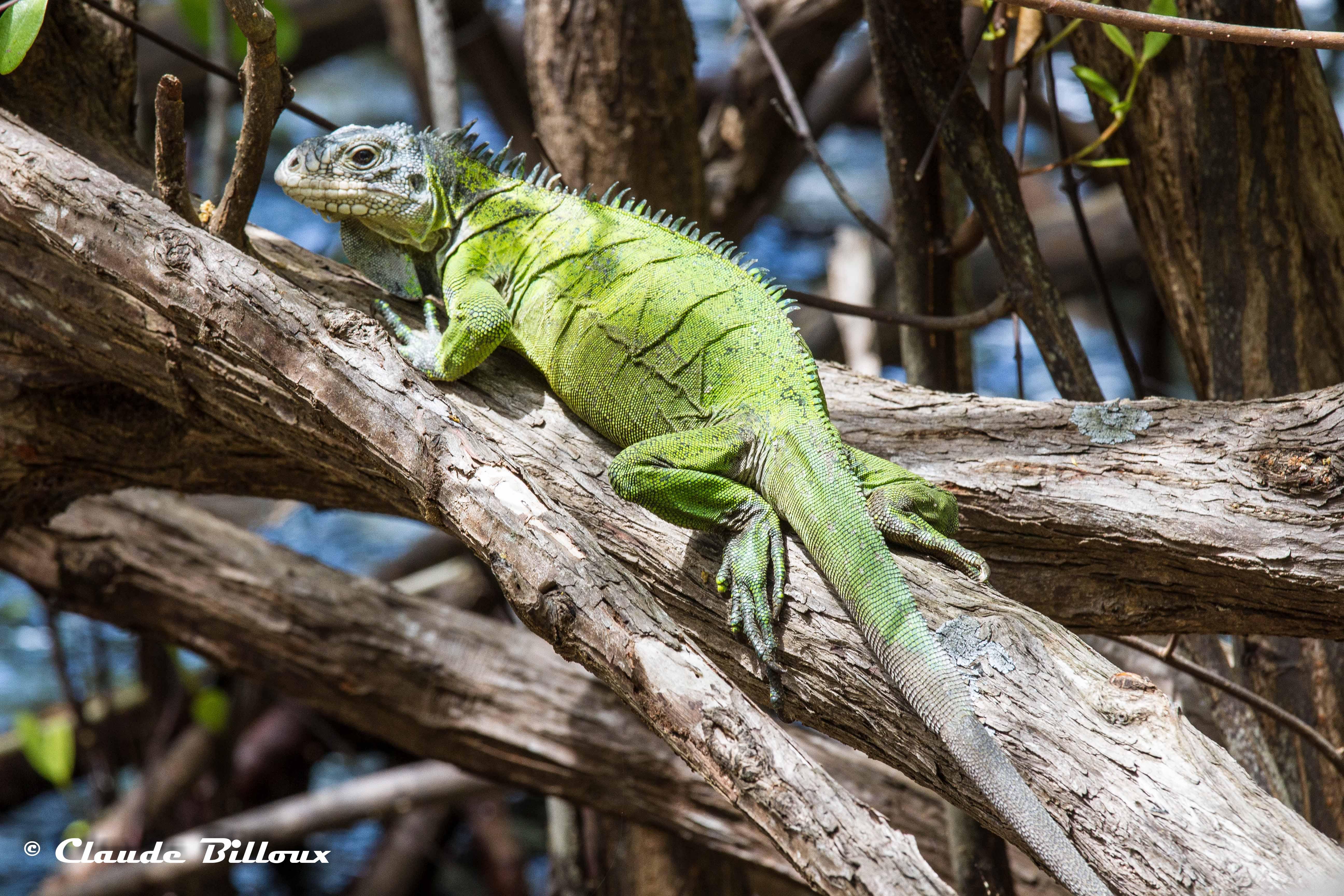 Martinique_0512.jpg