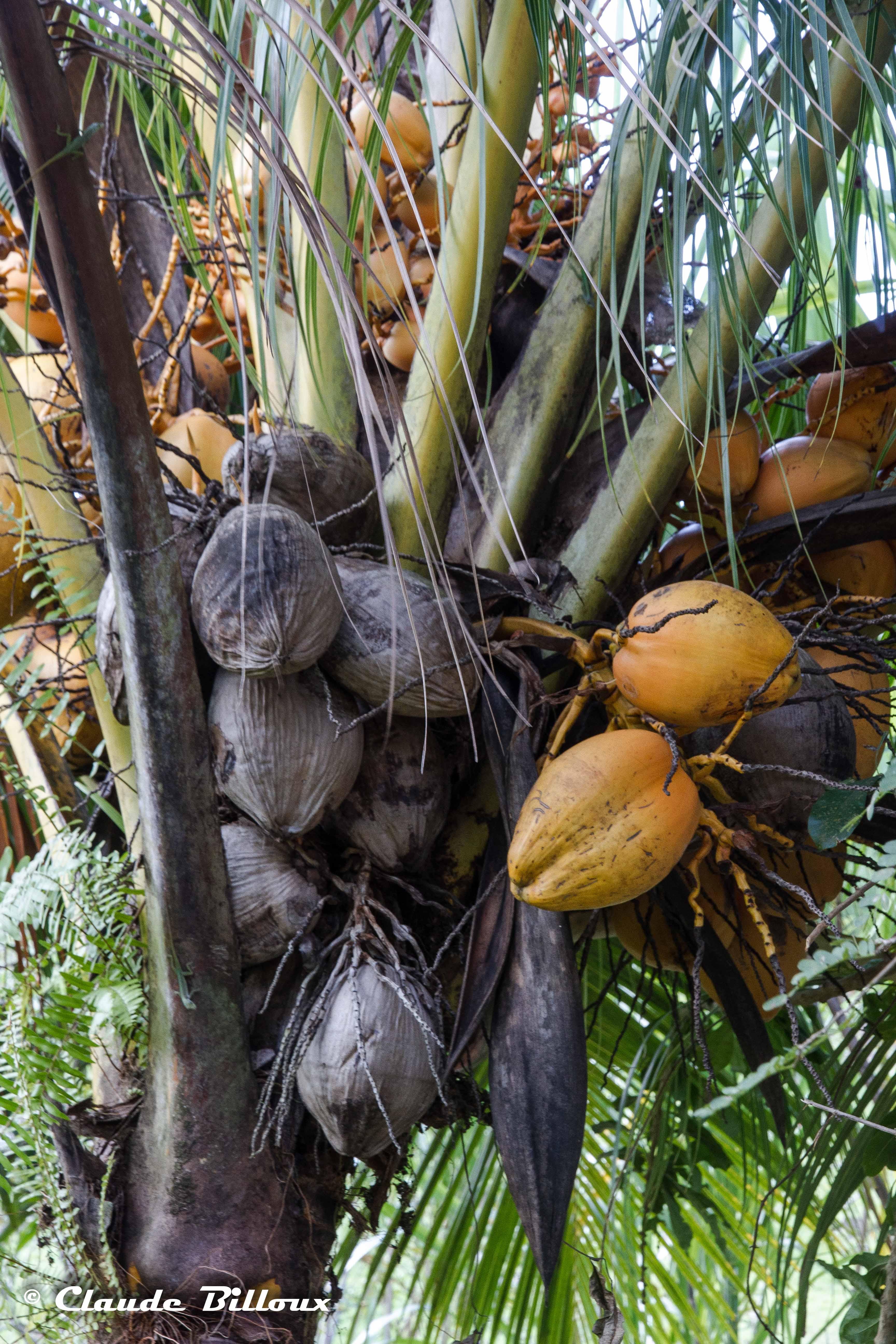 Martinique_1197.jpg