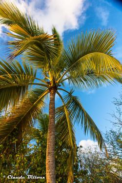 Martinique_0249.jpg