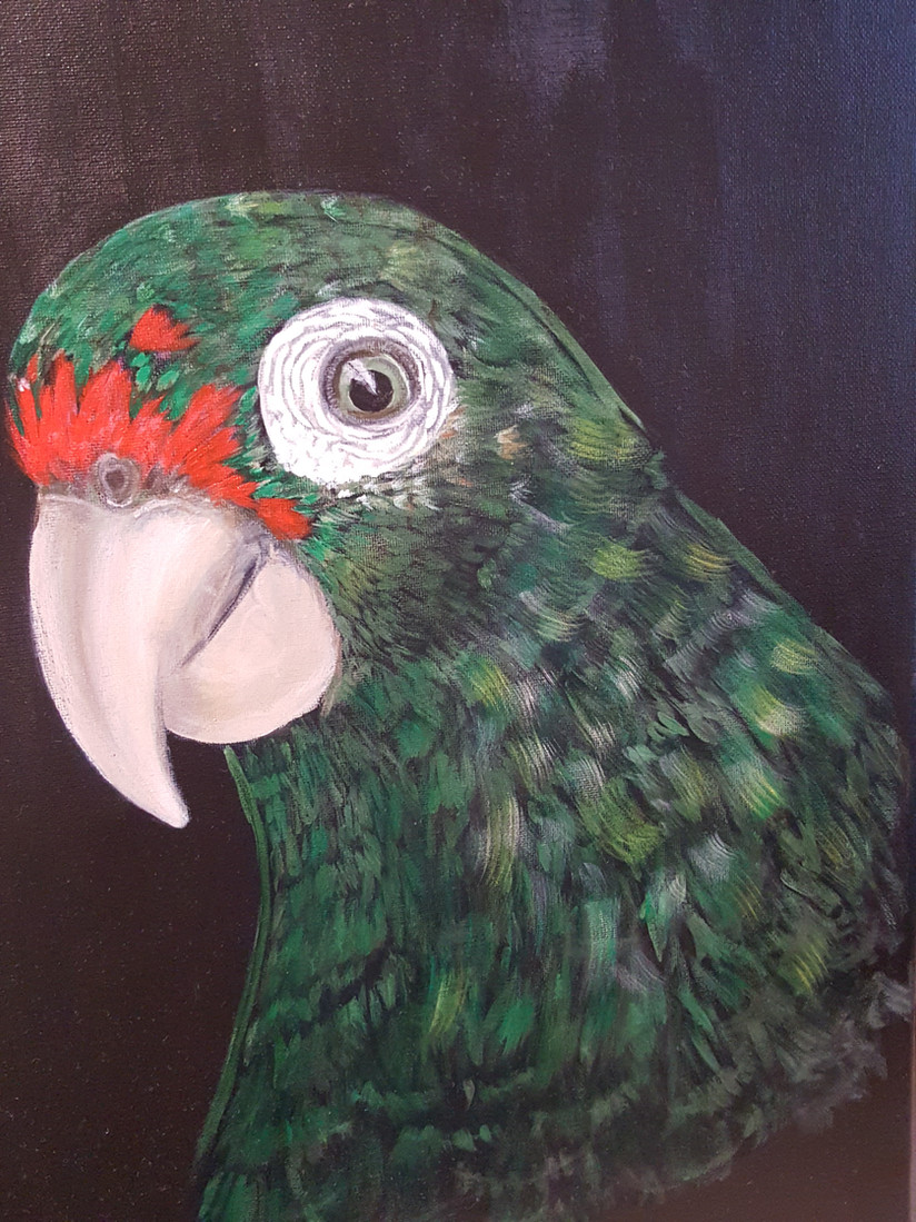 Amazona Vitata (Puertorrican Parrot)