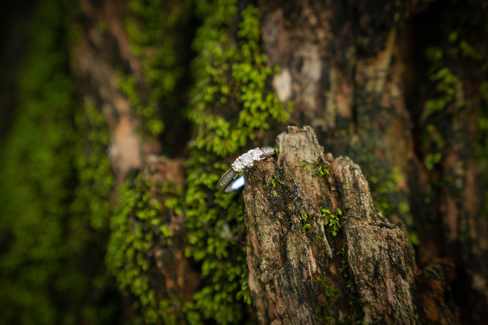 Detail ring shot in moss