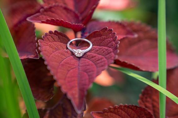 Indianapolis Wedding Photographer Emma Males - ring shot