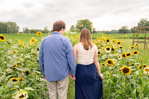 Indianapolis Wedding Photography - couple walking away from camera in sunflower field