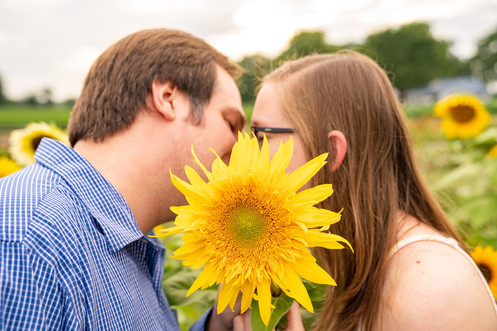 Indianapolis Wedding Photography - couple kissing behind sunflower