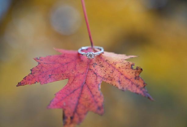 Fall leaf ring shot