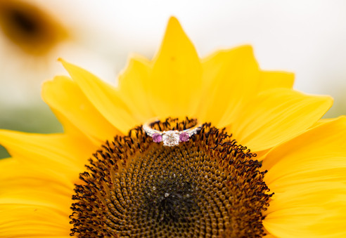 Indianapolis Wedding Photography - ring shot on sunflower