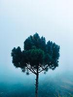 green-pine-tree-at-daytime-802127.jpg