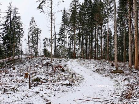 Holzerei im Strättligwald bewegt die Gemüter
