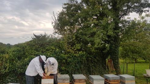 Le miel Gastronhoming de 2021 est arrivé!