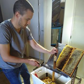 Gastronhoming a récolté son propre miel.