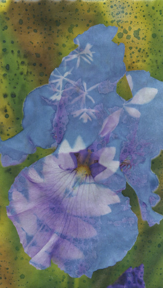 Acid Orchid 2