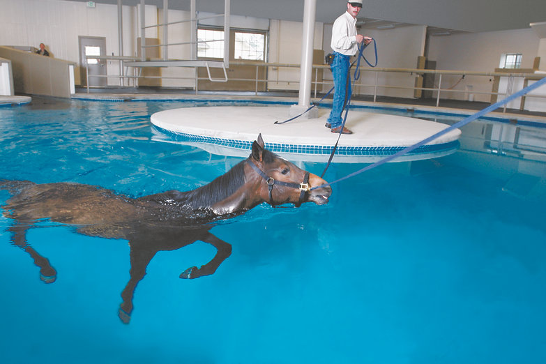 Equine Swimming Pool in Redmond, WA