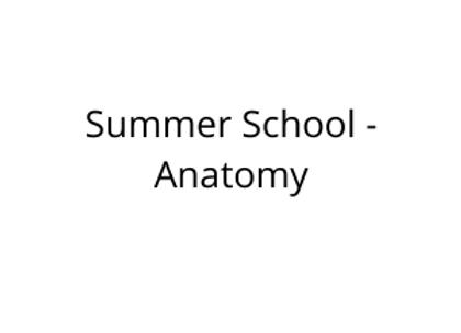 Summer School - Anatomy