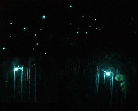 glowywormss.jpg