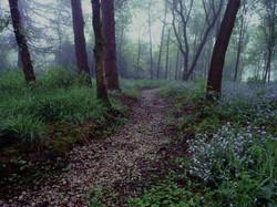 Woods, Yorkshire