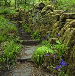 Ragley woods, West Yorkshire