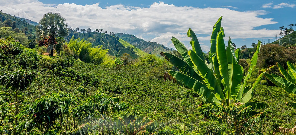 Our coffee beans are sourced fromquality brazilian and ethiopin plantations and then roasted to perfection with free delivery