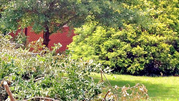 Yard Debris Image.jpg
