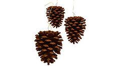 Hanger Pine Cones HP.jpg