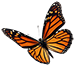 Butterfly 3 smr.png