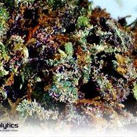 Purple Diesel sm.jpg