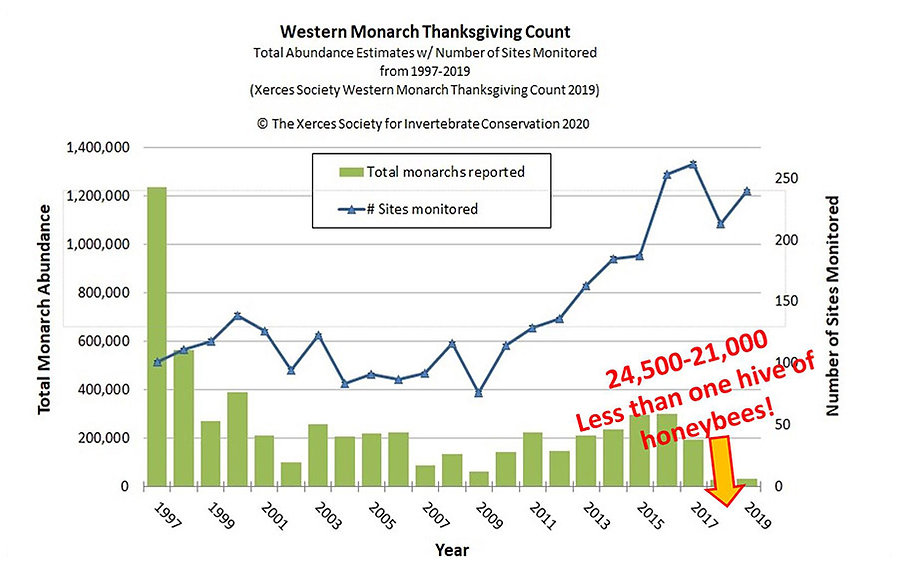 Monarch Count 11-2019 Graph md.jpg