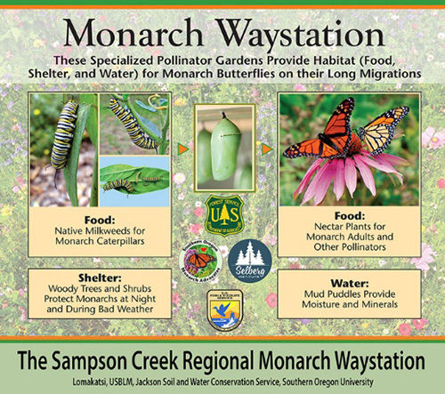 Sampson Creek Monarch Waystation.jpg