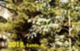 2018 Kenda S..jpg