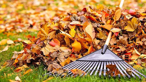 Leaf Removal Image.jpg