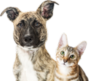 Dog and Cat Isolated sm.png