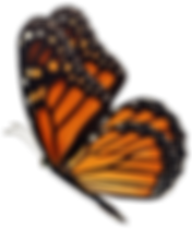 Butterfly 1 sm.png