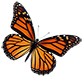 Butterfly 2 smr.png