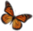 Butterfly 2 sm.png