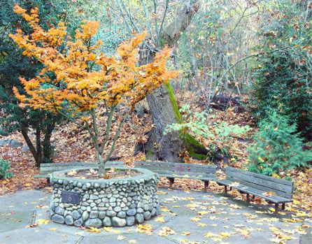 Lawn care ashland oregon, yard care ashland oregon, landscape maintenance ashland oregon