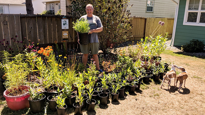 Yes, this really is my monarch waystation!