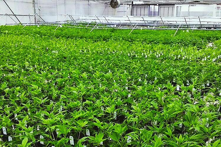 Farm Management Photo 3.jpg