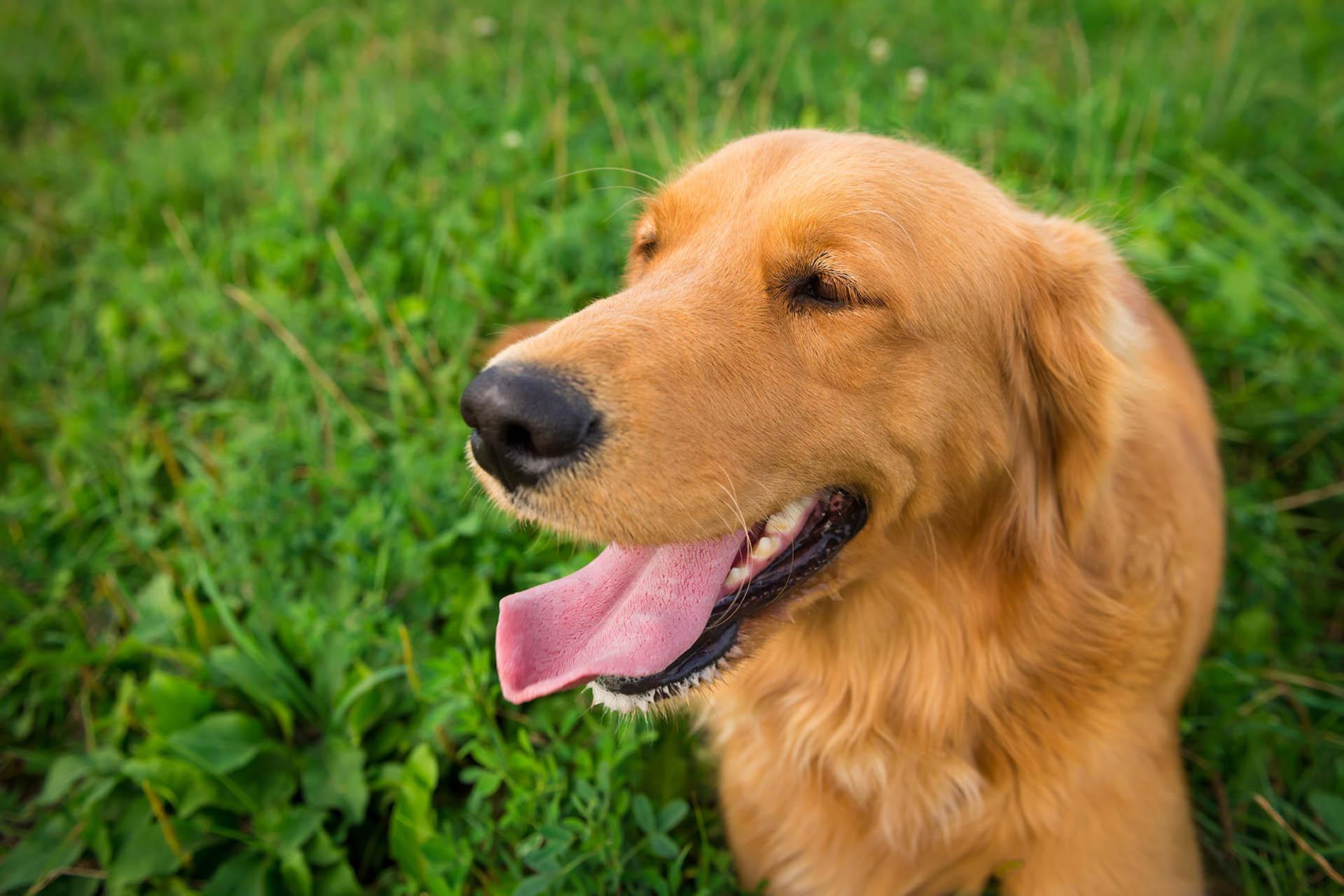 Dog Cremation Service Medford Oregon