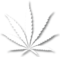 Marijuana Leaf White with shadow sm.png