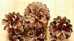 Small Pine Cones HP.jpg