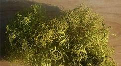 Botanicals HP.jpg