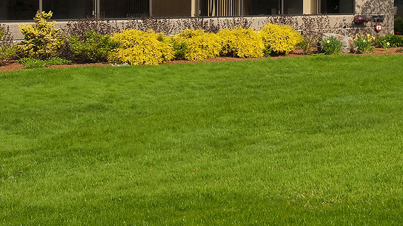 Lawn Fertilization Image.jpg