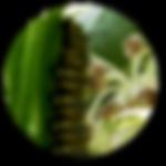 Monarch Milkweed Network Logo Art.png