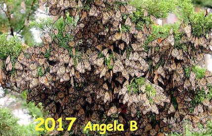 2017 Angela B.jpg