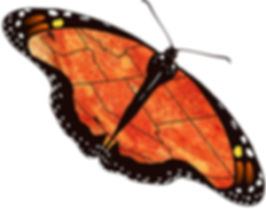 7 State Map Butterfly Rotated md.png