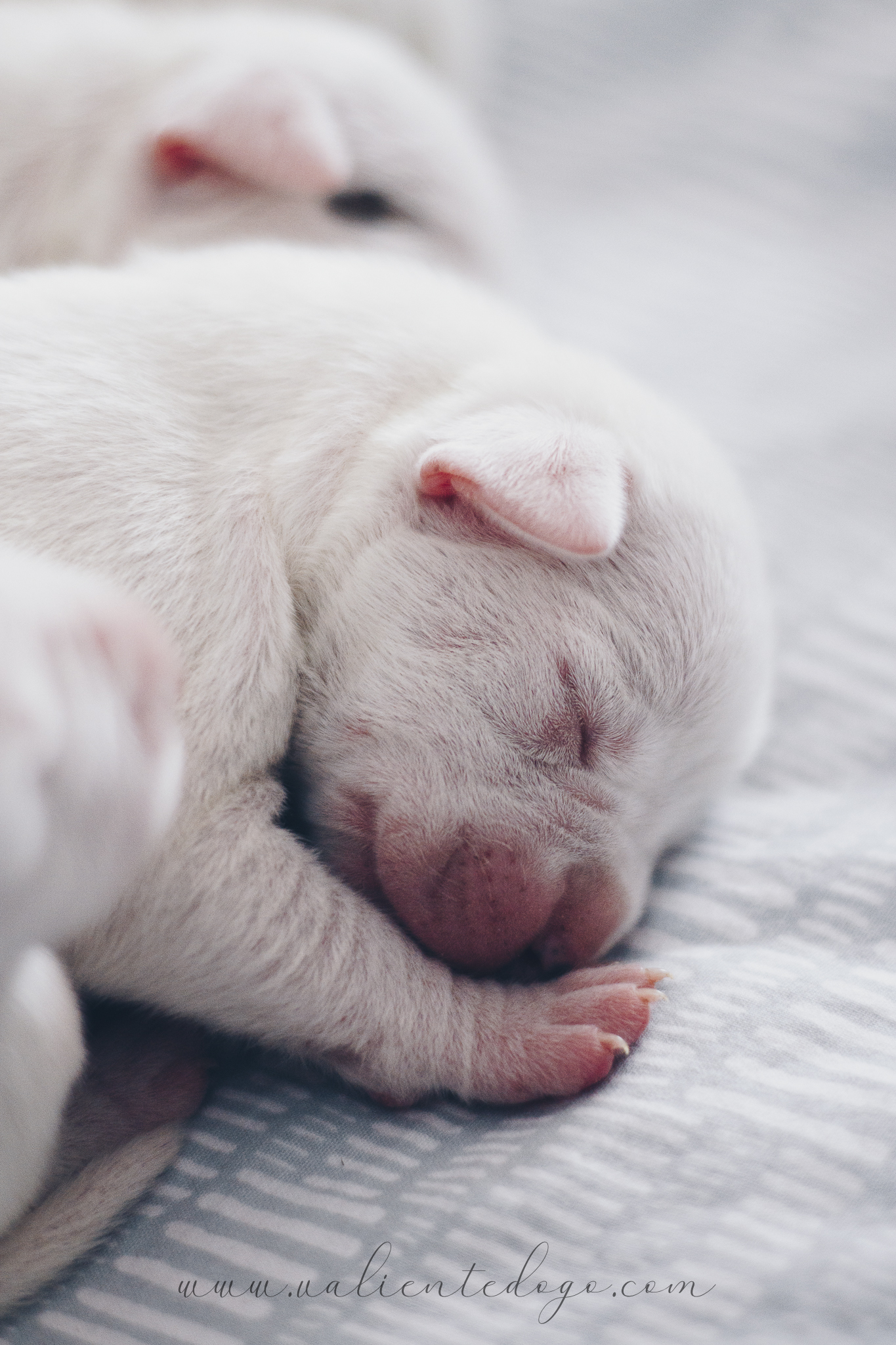 4 days old