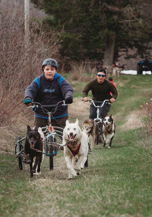 Dryland dog carting 2021