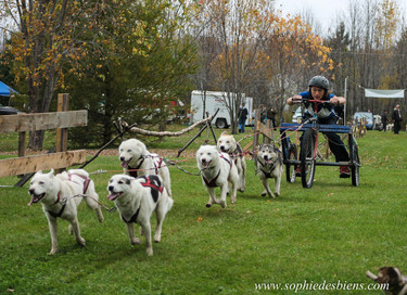 Kart 6 chiens