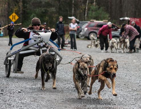 Kart 4 chiens